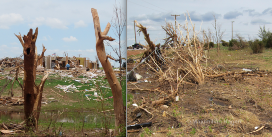The Moore tornado caused extreme vegetation damage in areas just west of the city. Large trees were completely debarked or sheared just above ground level in a swath often only 30 yards wide. Near Western Avenue, the tornado left a streak of scoured earth only 50ft away from bushes with relatively little damage.