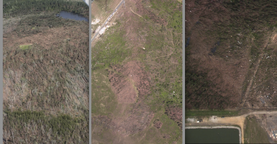 Vegetation damage is good method of comparing tornado intensity. The above pictures show damage to pine trees (with relative intensity increasing from left to right). At left, damage from the Phil Campbell tornado, at center, a streak of extreme damage following the Rainsville tornado, and at right, a pine forest scoured to the ground