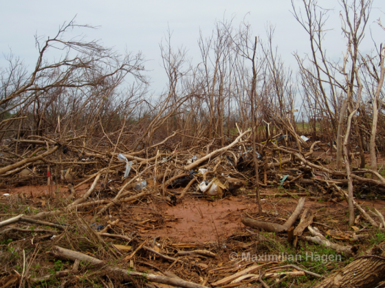 A forested area just east of County Edge Drive was stripped bare by winds of EF5 intensity.